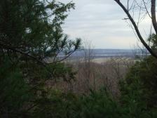 Paysage vu d'un arbre