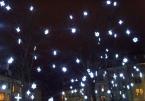 Arbres en lumière