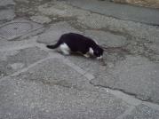 Jeu du chat et de la souris