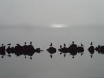 Poésie sur le lac d'Annecy