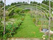 Jardin potager Mas des Faïsses