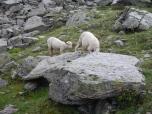TMB moutons
