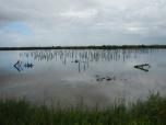 Réserve du Teich
