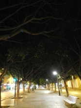 Arbres allée Malaga