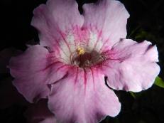 Fleur Castillo Gibralfaro