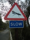 Panneau slow original Gibraltar