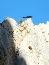 Rapace et grimpeur au Caminito del Rey - El Chorro