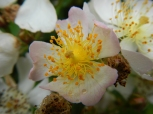Fleur jardin botanique Brera