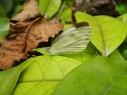 butterfly-chongqing