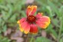 flower-chongqing