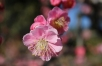 nabana-no-sato-winter-flower