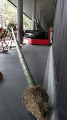 todaiji-shunie-branche-baton