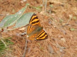 beau-papillon-montagne-cangshan