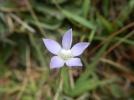 fleur-bleue-montagne-cangshan