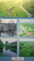 nature-mangrove-guerre-vietnam