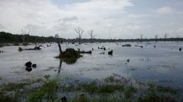 paysage-angkor