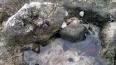 coquillages-pointe-des-chateaux