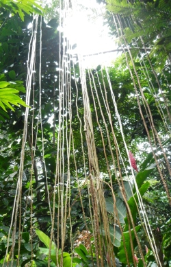 foret-tropicale-guadeloupe