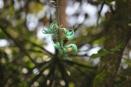 Perle de Jade